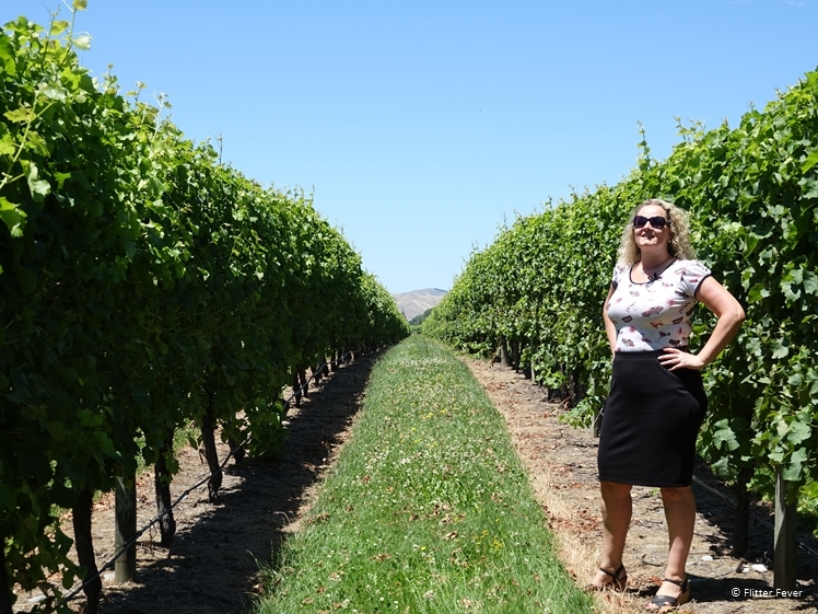 Visiting a vineyard is fun