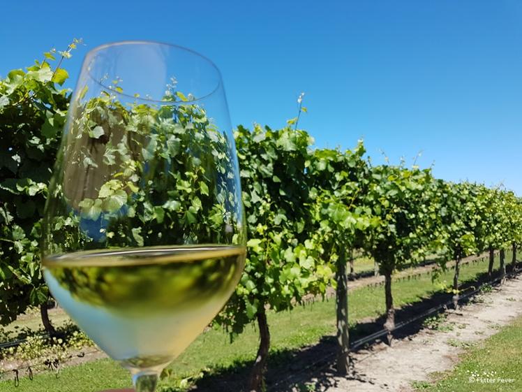 White wine in glass at vineyard