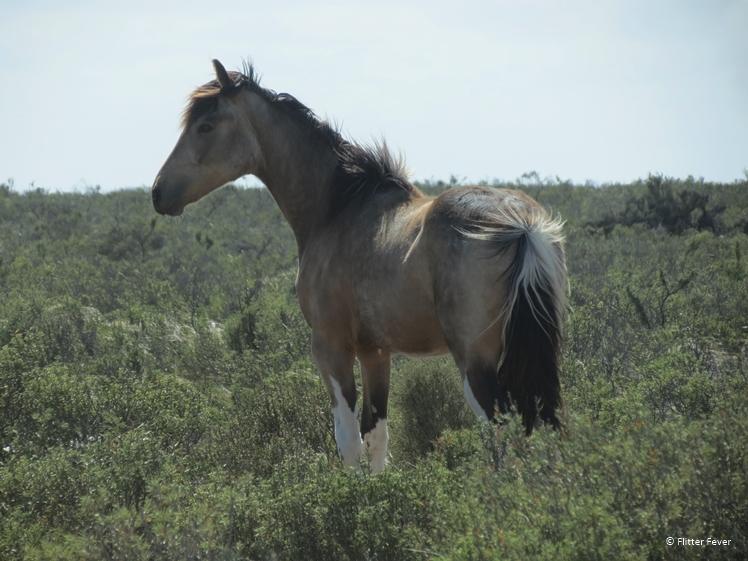 Horse Peninsula Valdes