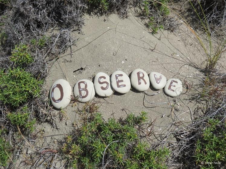 OBSERVE written on stones at Peninsula Valdes