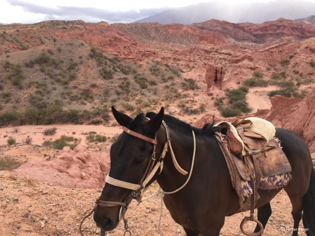 Quebrada de las Conchas view and my horse for the day