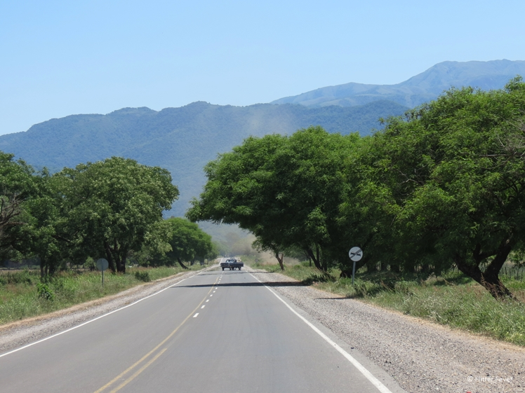Road with overhanging trees Salta Province