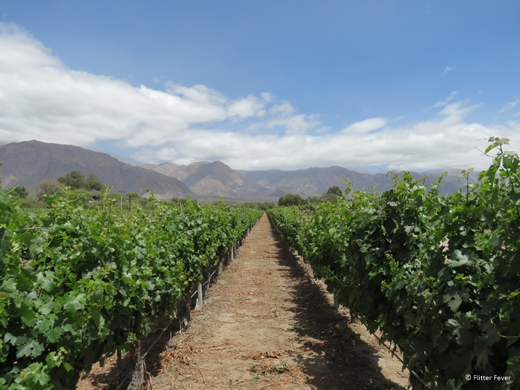 Vineyard with mountain on background in Cafayate, Argentina