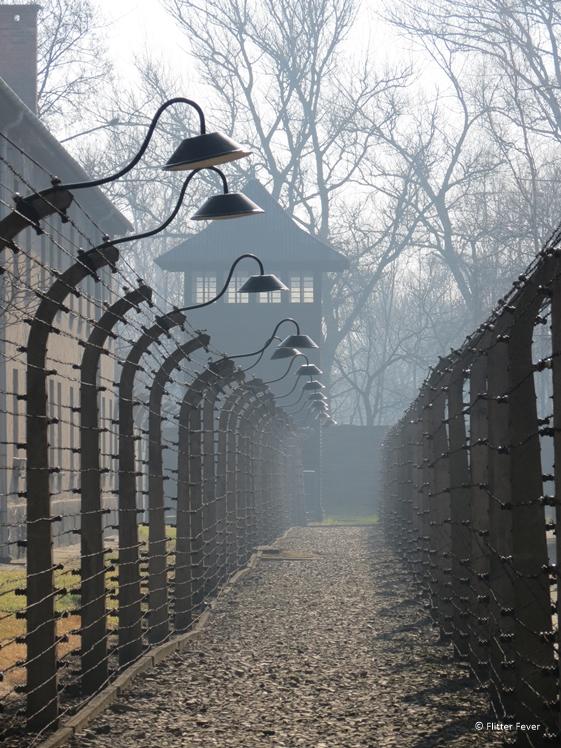 Auschwitz barbwire fences
