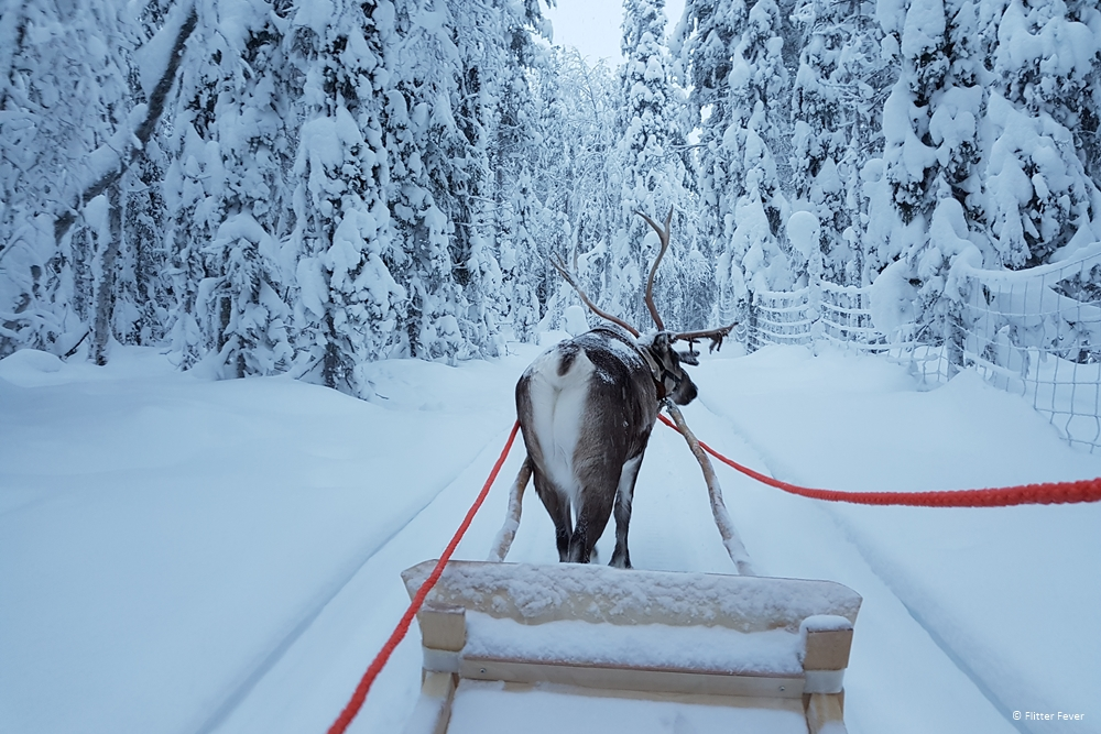 A magical sleigh ride through the snow in Finnish Lapland