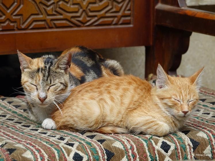 Cats Historic Cairo