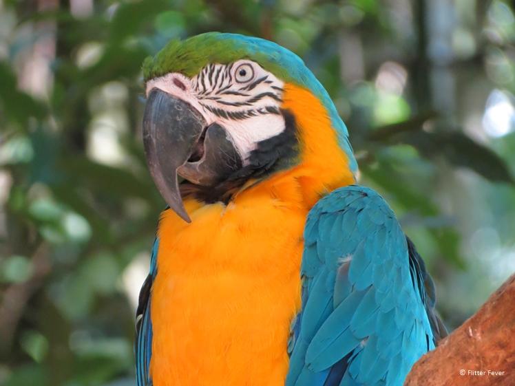 Iguazu Falls parrot yellow