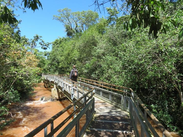 Walkway through the jungle of Iguazu Falls